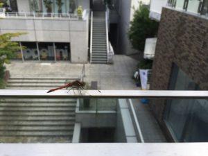 ラ ジュネス 代官山 ~la JEUNESSE DAIKANYAMA~ ラフェンテ代官山アネックス2F 東京 渋谷