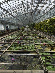 熱川 バナナワニ園 本園・植物園