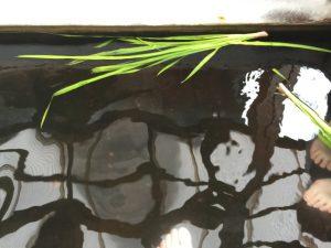 伊豆熱川 源泉足湯