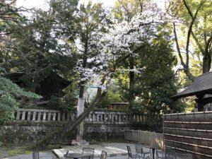 杜の広場 小田原城内 食事